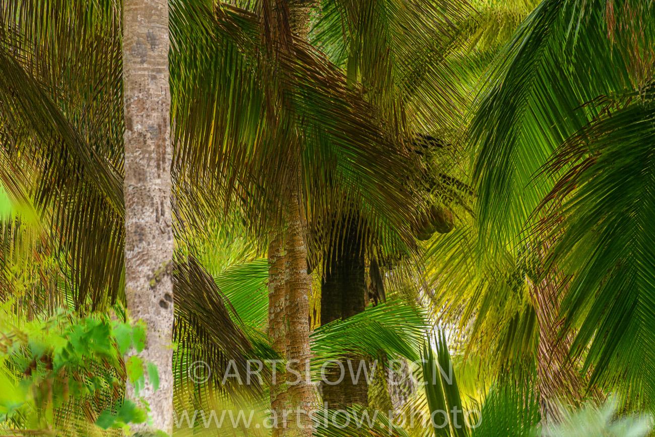 2002-9266-Cocoteros2, Bocas del Toro,Isla de Colón, Panamá - Paisajes Tropicales - ARTSLOW BCN GALLERY SHOP, www.artslow.photo