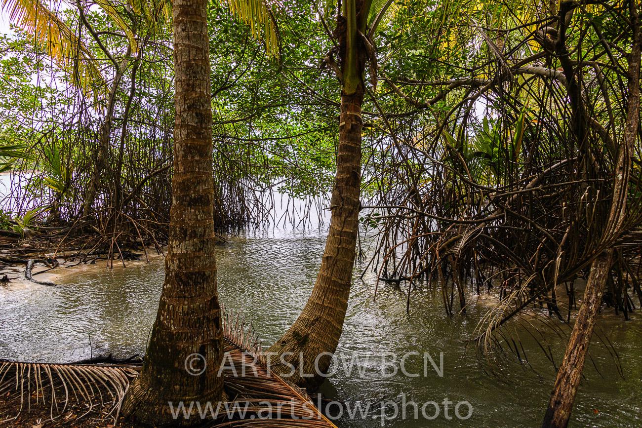 2002-9306-Cocoteros y Mangle rojo, Bocas del Toro,Isla de Colón, Panamá - Paisajes Tropicales - ARTSLOW BCN GALLERY SHOP, www.artslow.photo