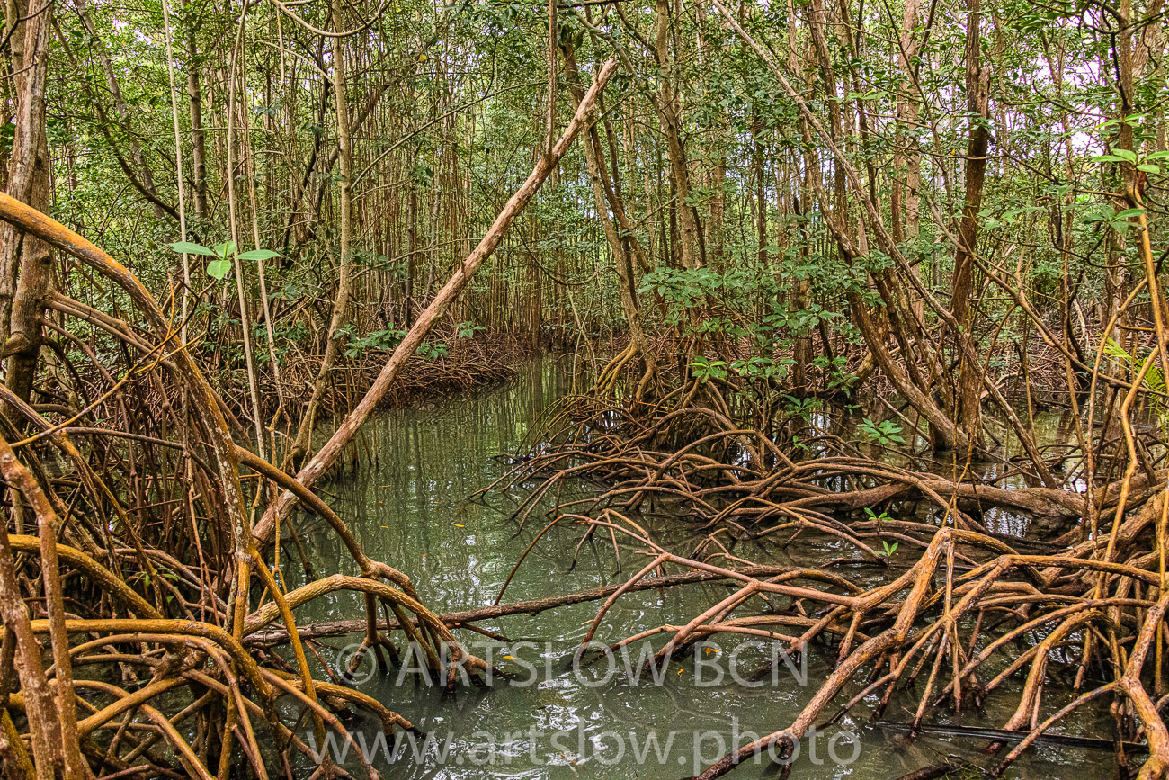2002-9323-Manglar Rojo2, Bocas del Toro,Isla de Colón, Panamá - Paisajes Tropicales - ARTSLOW BCN GALLERY SHOP, www.artslow.photo