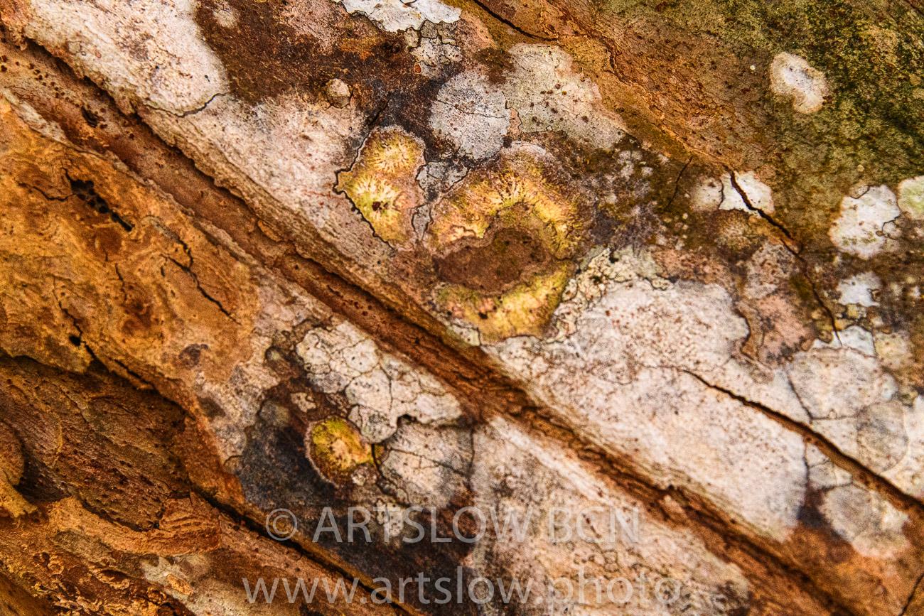 2002-9567-Líquenes 2 sobre tronco de árbol tropical, Bocas del Toro,Isla de Colón, Panamá - Paisajes Tropicales - ARTSLOW BCN GALLERY SHOP, www.artslow.photo
