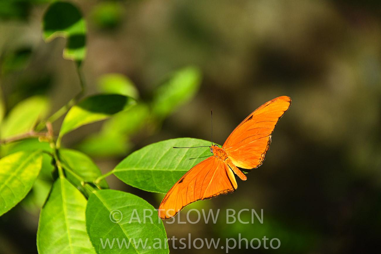 2002-9815- Mariposa XXXXXX- condiciones controladas - Paisajes Tropicales - ARTSLOW BCN GALLERY SHOP, www.artslow.photo