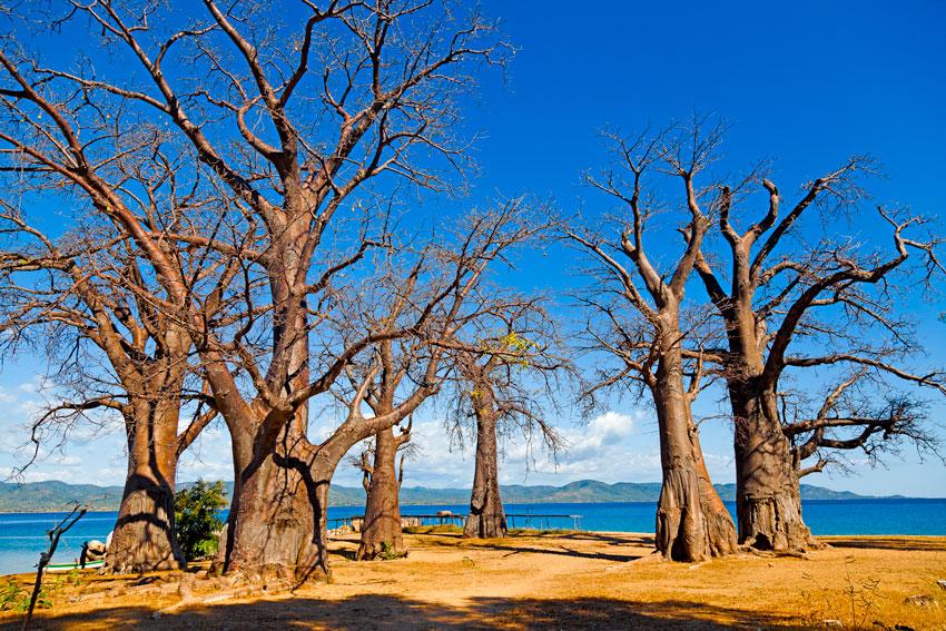 baobabs Isla de Likoma- Lago Nyassa   -  Norte de Mozambique paisajes - Augusto Rodríguez, Landscape & Portrait