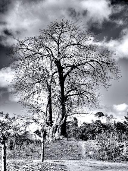 Baobabs - Augusto Rodríguez, Landscape & Portrait