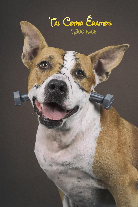 Pide tu Calendario DogCity - Calendario Solidario