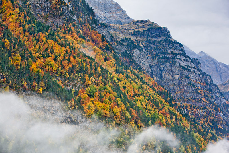 Pineta - Otoño en el Pirineo - Bakartxo Aniz Aldasoro, Fotografía de naturaleza, etnografía y viajes