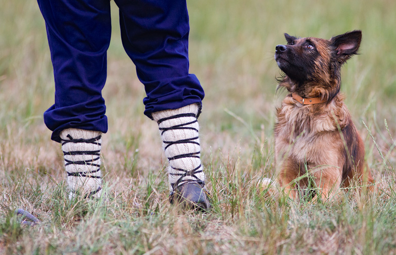Mirada de nobleza y obediencia al pastor - Perros pastor - Bakartxo Aniz Aldasoro, Fotografía de naturaleza, etnografía y viajes