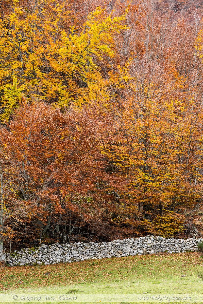 Detalle de bosque y muro de piedra - Somiedo - Tierra de teitos y bosques - Bakartxo Aniz - Fotografías de Asturias. Somiedo - Muniellos.