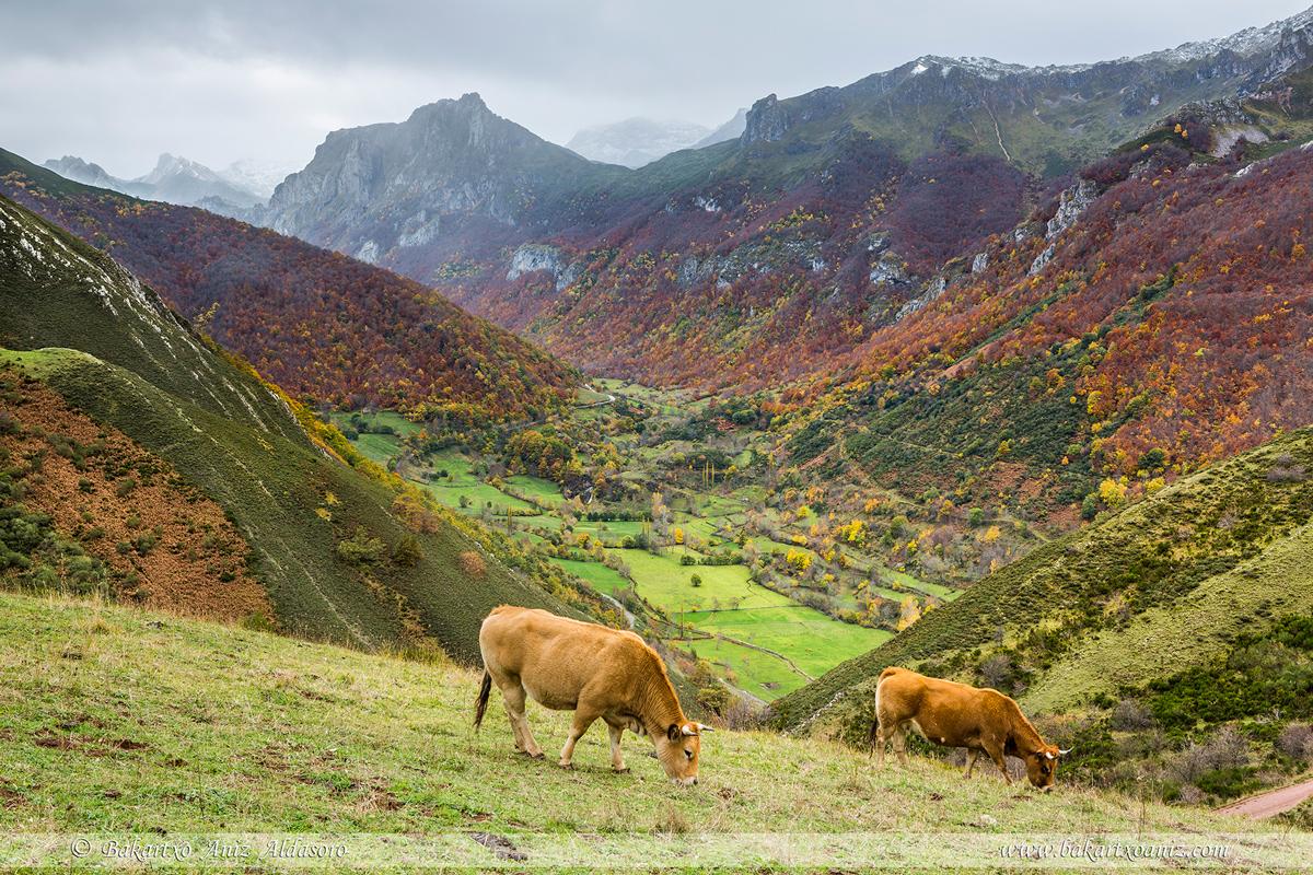 Valle de Saliencia - Somiedo - Somiedo - Tierra de teitos y bosques - Bakartxo Aniz - Fotografías de Asturias. Somiedo - Muniellos.