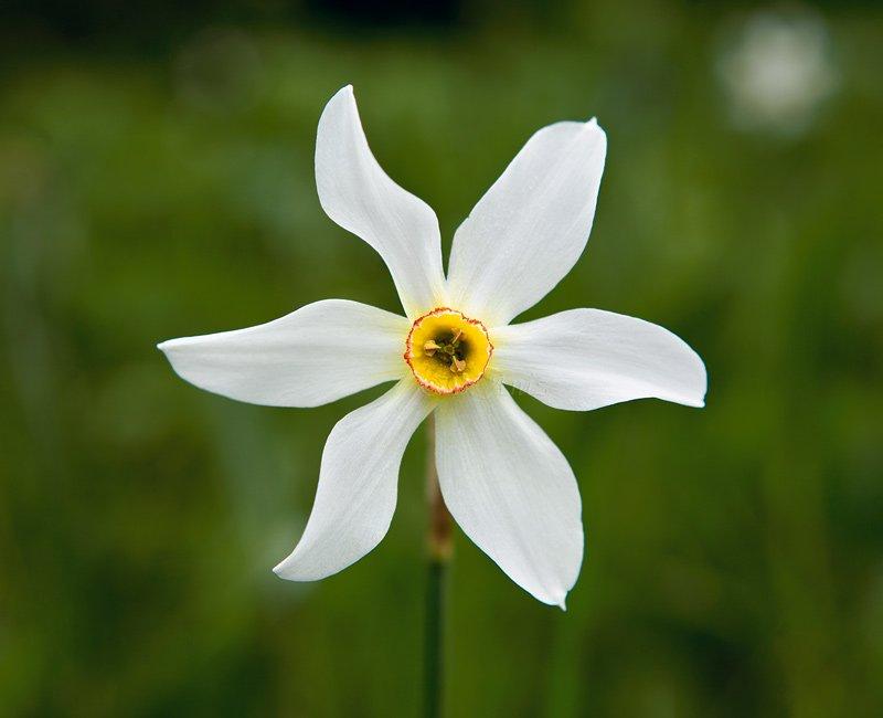 Narciso de los poetas -
