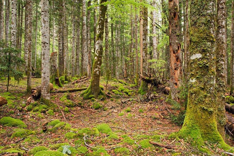 Hayedo abetal climácico - Pirineos - Paisaje - Bakartxo Aniz - Fotografías de paisajes en Pirineos, Suiza y Venezuela.