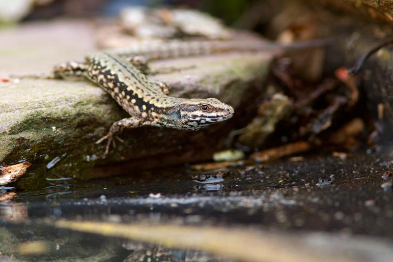 Anfibios y reptiles - Bakartxo Aniz - Fotografías de anfibios y reptiles.