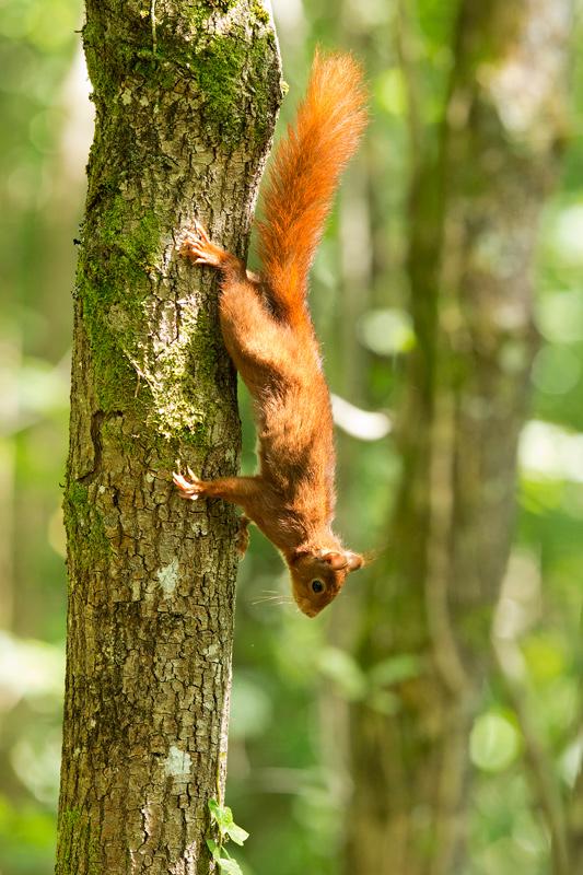 Mamíferos - Bakartxo Aniz - Fotografías de mamíferos.