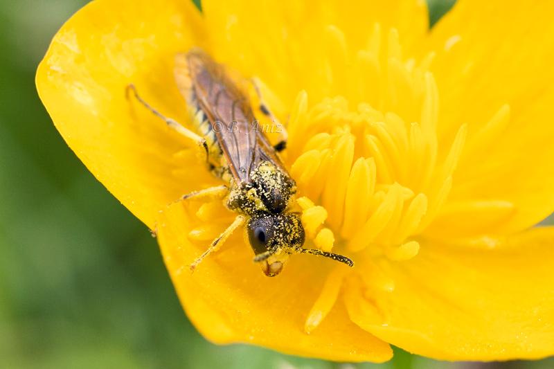 Invertebrados - Bakartxo Aniz - Fotografías de invertebrados.