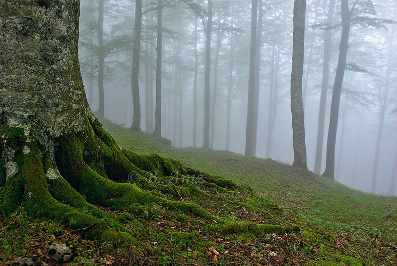 Niebla en el hayedo - Paisaje - Bakartxo Aniz - Fotografías de paisajes en Pirineos, Suiza y Venezuela.