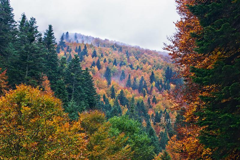 Selva de Irati - Paisaje - Bakartxo Aniz - Fotografías de paisajes en Pirineos, Suiza y Venezuela.