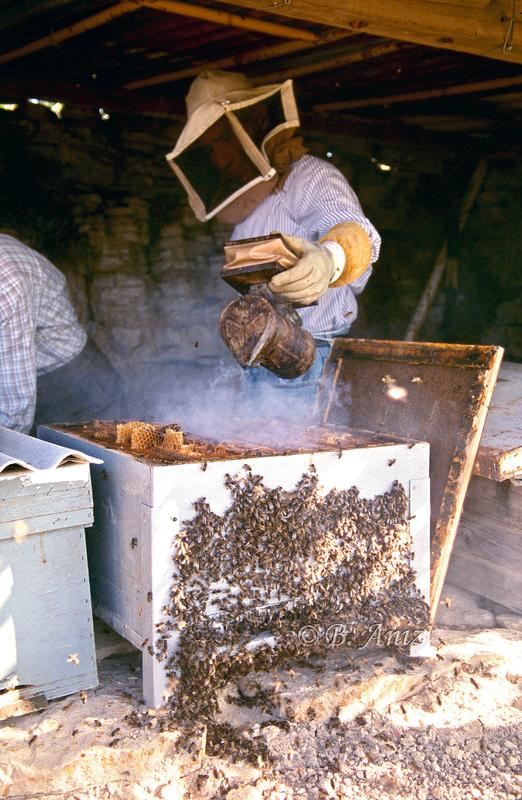 Echando humo para espantar a las abejas - Extrayendo la miel - Bakartxo Aniz - Fotografías de Apicultura.