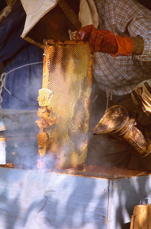 Panal - Extrayendo la miel - Bakartxo Aniz - Fotografías de Apicultura.