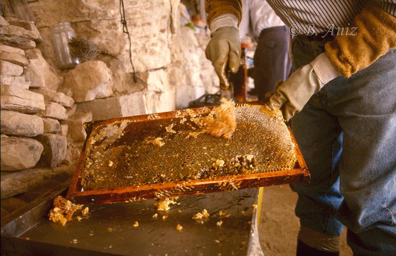 Rascando el exterior para extraer la miel - Extrayendo la miel - Bakartxo Aniz - Fotografías de Apicultura.
