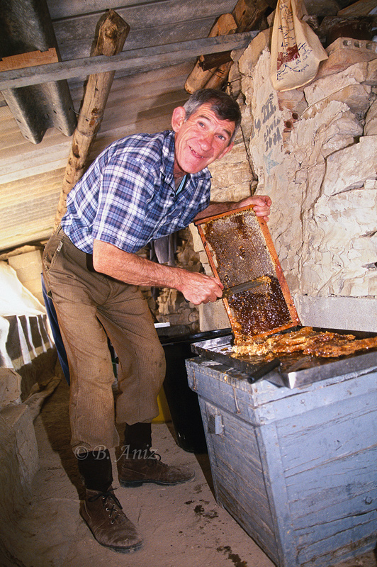Extrayendo la miel - Bakartxo Aniz - Fotografías de Apicultura.