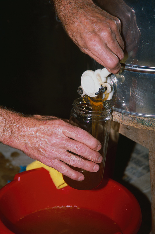 Embotando la miel - Extrayendo la miel - Bakartxo Aniz - Fotografías de Apicultura.