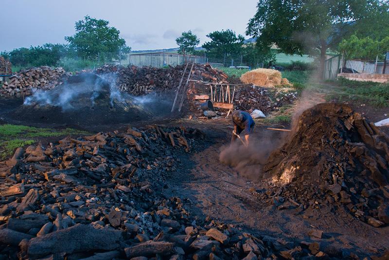 Sacando el carbón - Oficio de carbonero - Bakartxo Aniz - Fotografías sobre el oficio de Carbonero - Valle de Lana.
