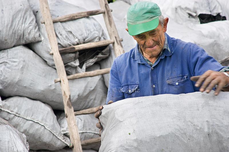 Apilando los sacos - Oficio de carbonero - Bakartxo Aniz - Fotografías sobre el oficio de Carbonero - Valle de Lana.