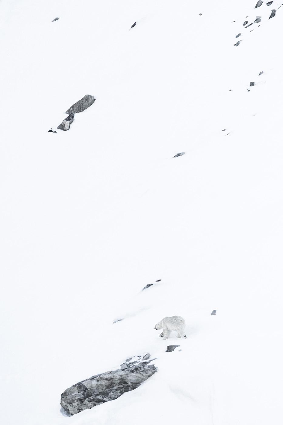 Nanook - Una historia del ártico - Carlos Acin. Una historia del ártico.