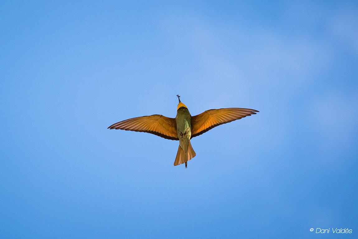 Instinct - Algunos amigos voladores :) - Some flying friends