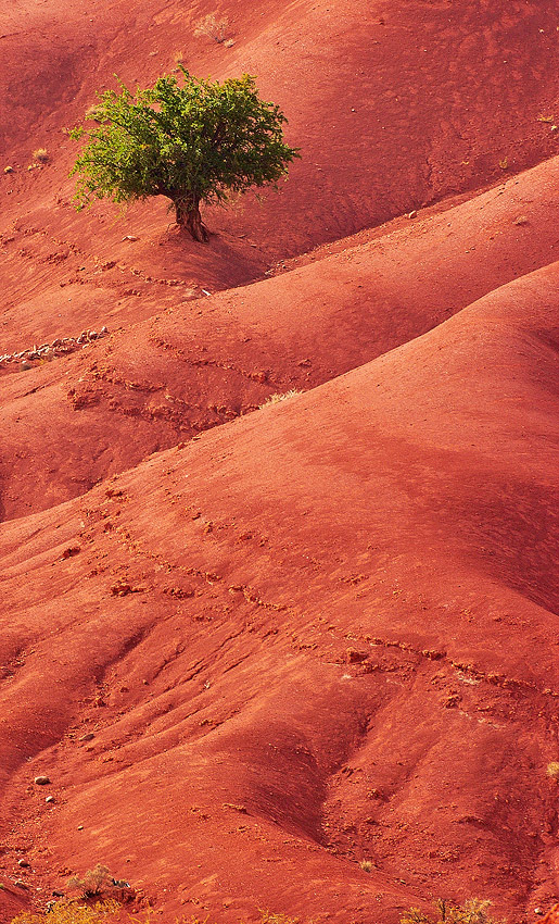 Argán en rojo - Conversaciones privadas con la Naturaleza - Daniel Montero , Fotografía