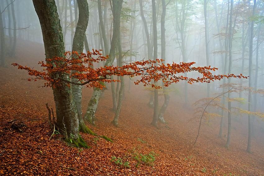 Línea horizontal - Conversaciones privadas con la Naturaleza - Daniel Montero , Fotografía