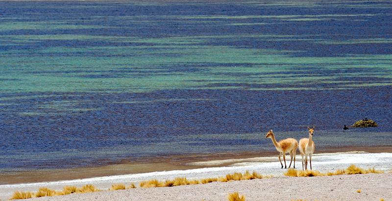 Animalia - Daniel Montero , Fotografía