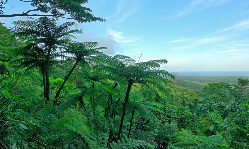 Cape Tribulation, QLD - El reino Ocre: Territorio del Norte y Queensland, Australia - Daniel Montero , Fotografía
