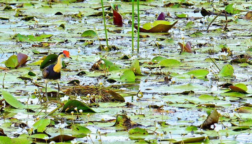 Kakadu Natl. Park, NT - El reino Ocre: Territorio del Norte y Queensland, Australia - Daniel Montero , Fotografía