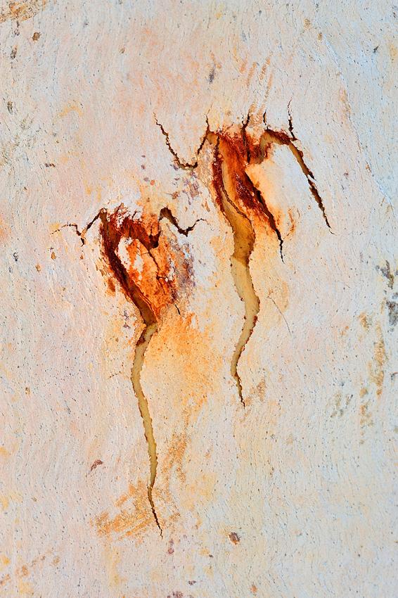 Ochre VII - Scorpions - El reino Ocre: Territorio del Norte y Queensland, Australia - Daniel Montero , Fotografía