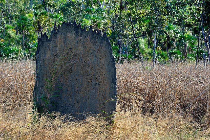 Magnetic Termite Mounds, Litchfield Natl. Park, NT - El reino Ocre: Territorio del Norte y Queensland, Australia - Daniel Montero , Fotografía