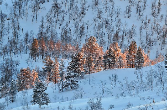 buscando la luz - Apuntes desde la Isla de Senja (Noruega, 2013) - Daniel Montero , Fotografía