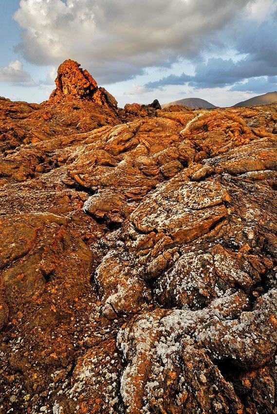 Canarias Salvaje - Daniel Montero , Fotografía