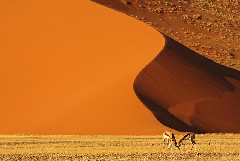 Esencia del Namib - Conversaciones privadas con la Naturaleza - Daniel Montero , Fotografía