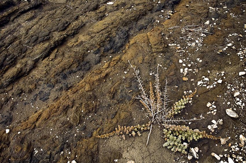 estrella del desierto - tierra Natural - Exposicion Tierra natural