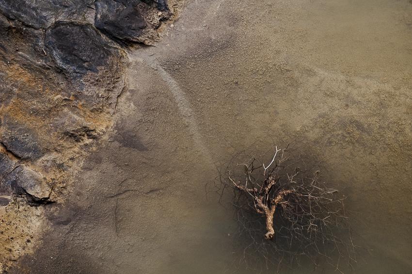 la rama y el agua - tierra Natural - Exposicion Tierra natural