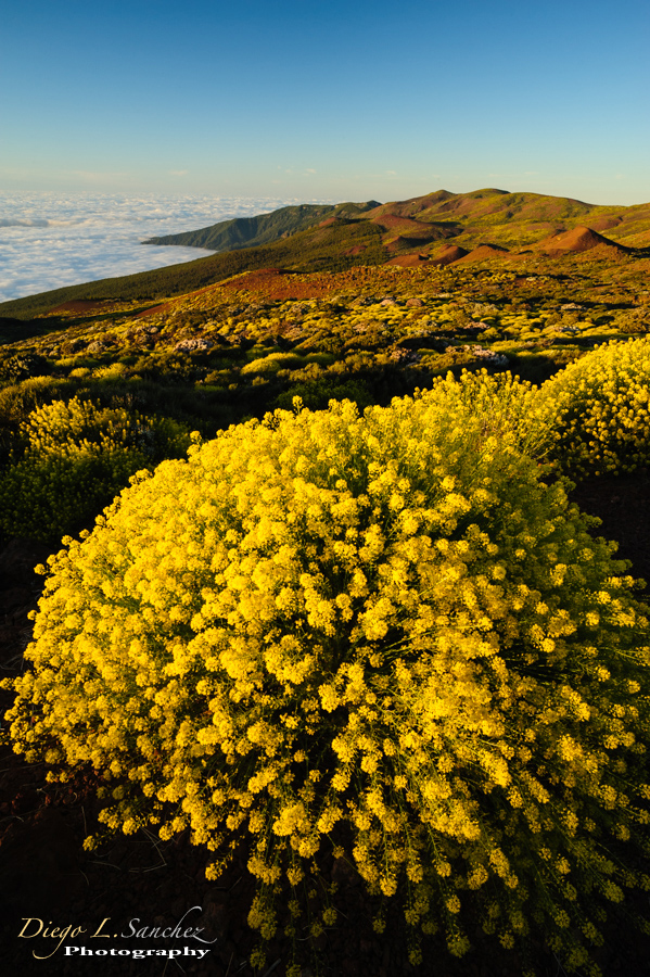 Canary Islands - Nature of the Canary Islands