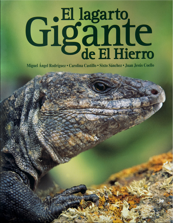 Giant Lizards - The giant lizards of the Canary Islands