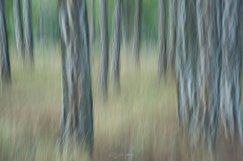 foresta - Diego L. Sánchez, Photography