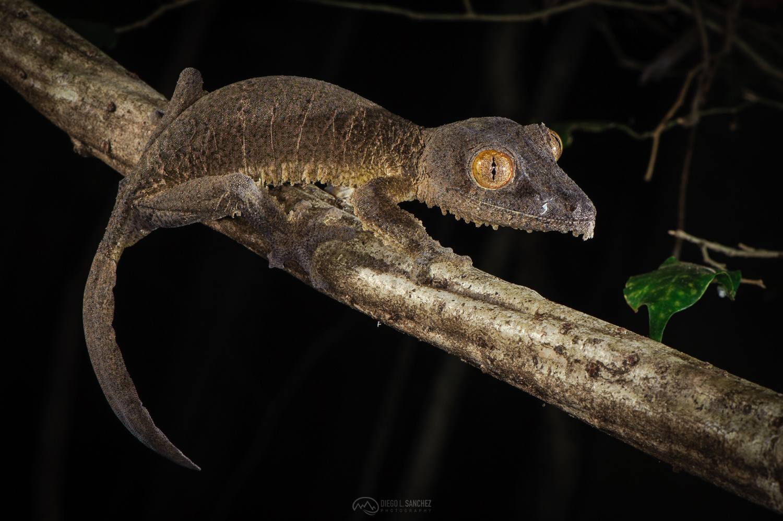 fauna - Diego L. Sánchez, Photography