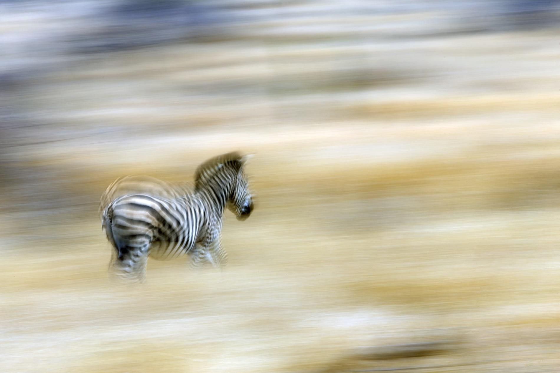Fauna - David Santiago, Landscape Photography