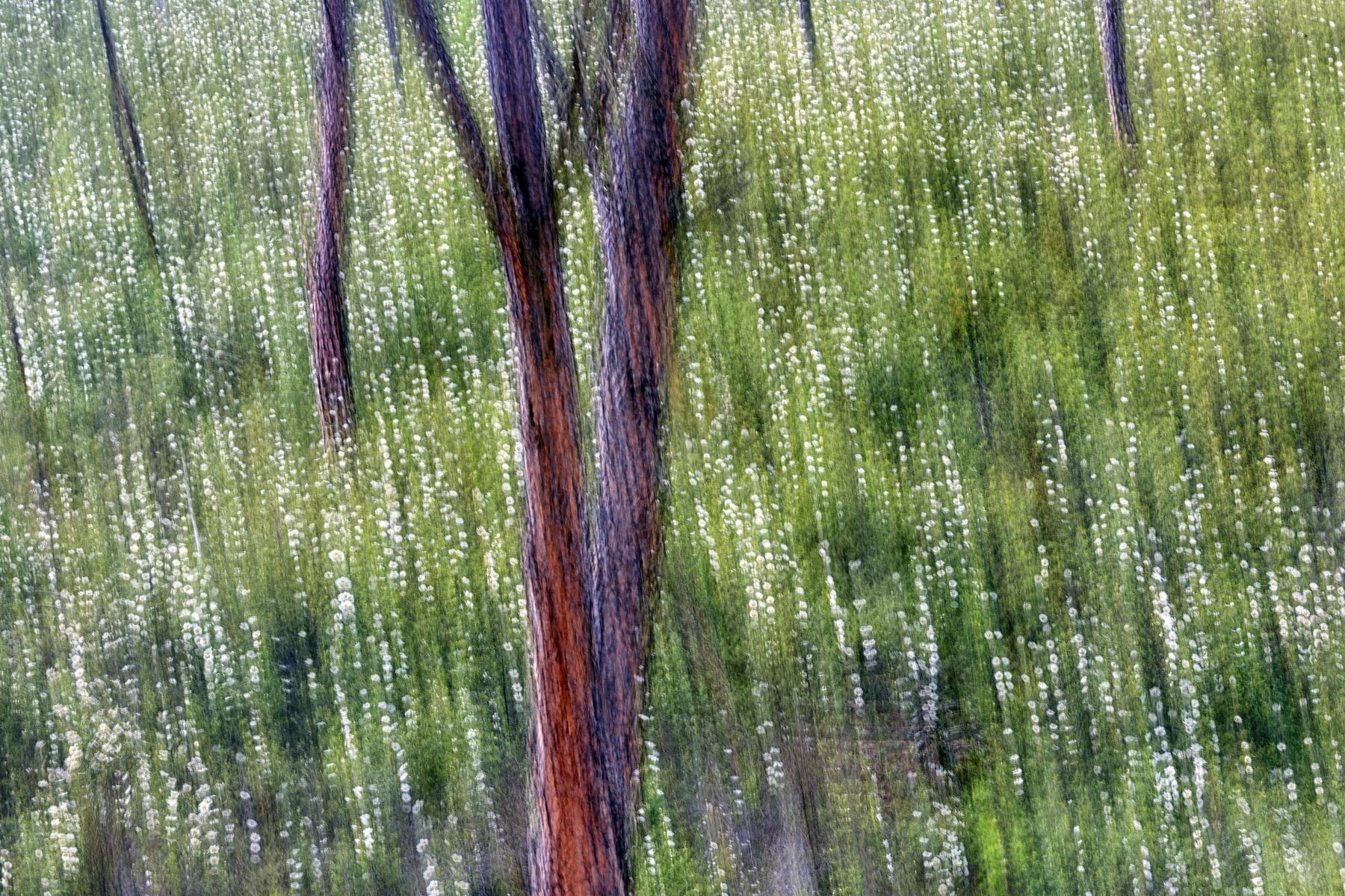 PUNTILLISMO - David Santiago, Landscape Photography
