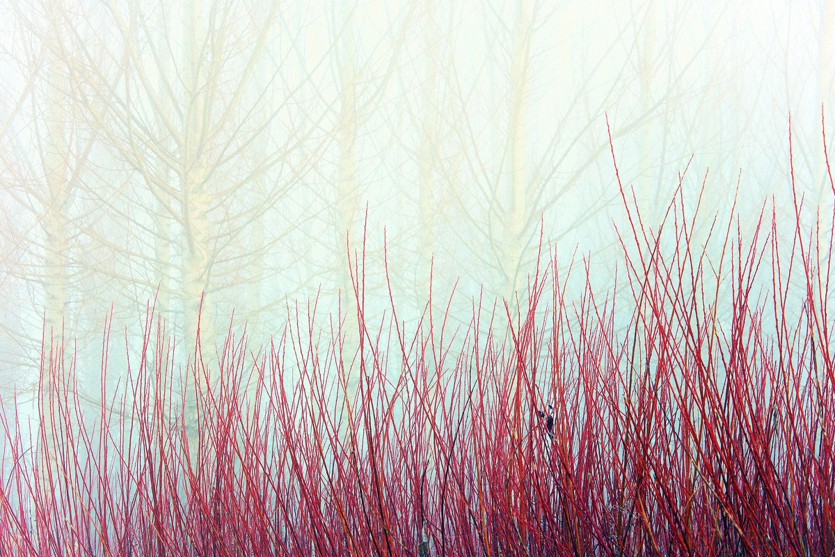 MIMBRES - David Santiago, Landscape Photography