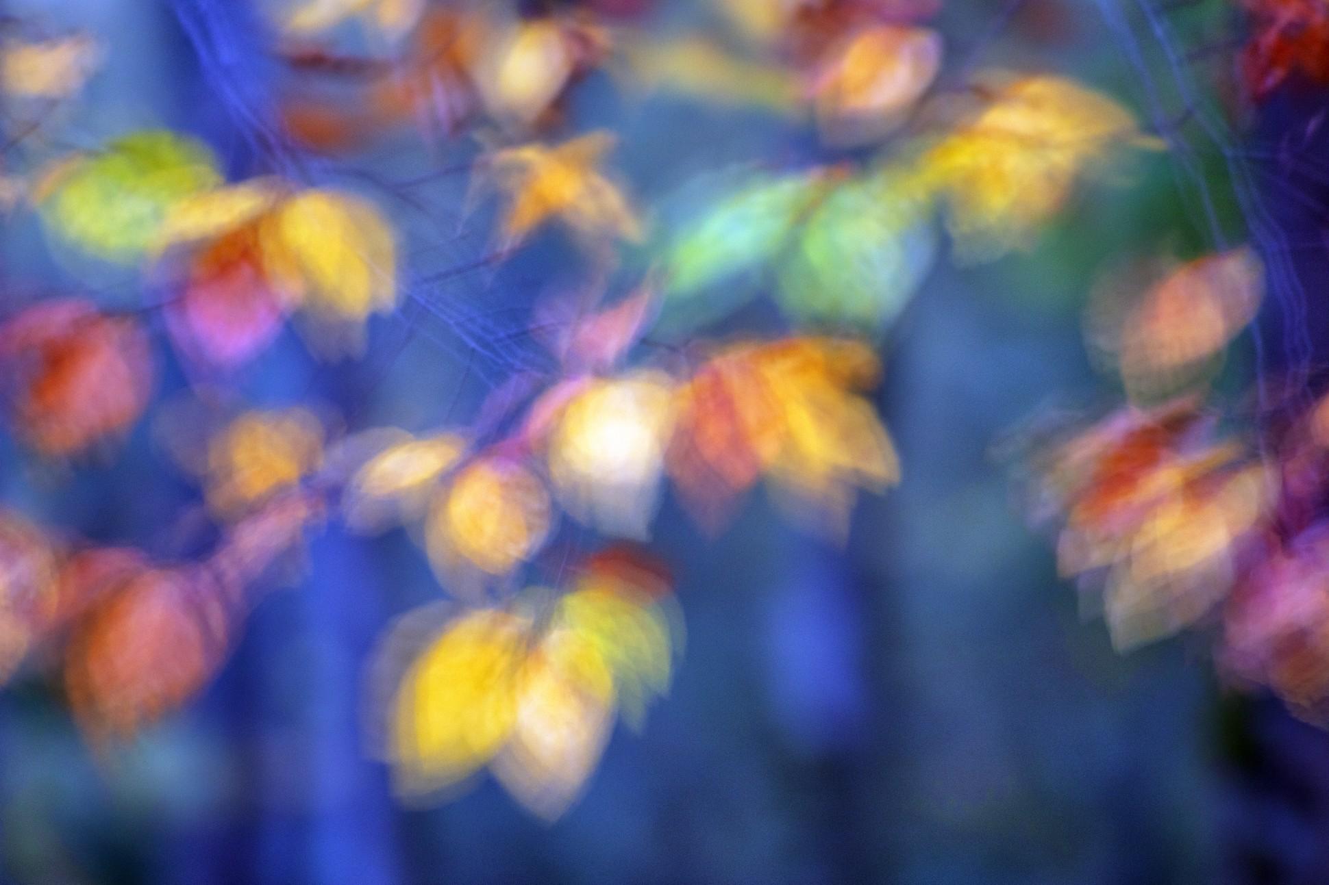 IMPRESSIONNISME - David Santiago, Landscape Photography