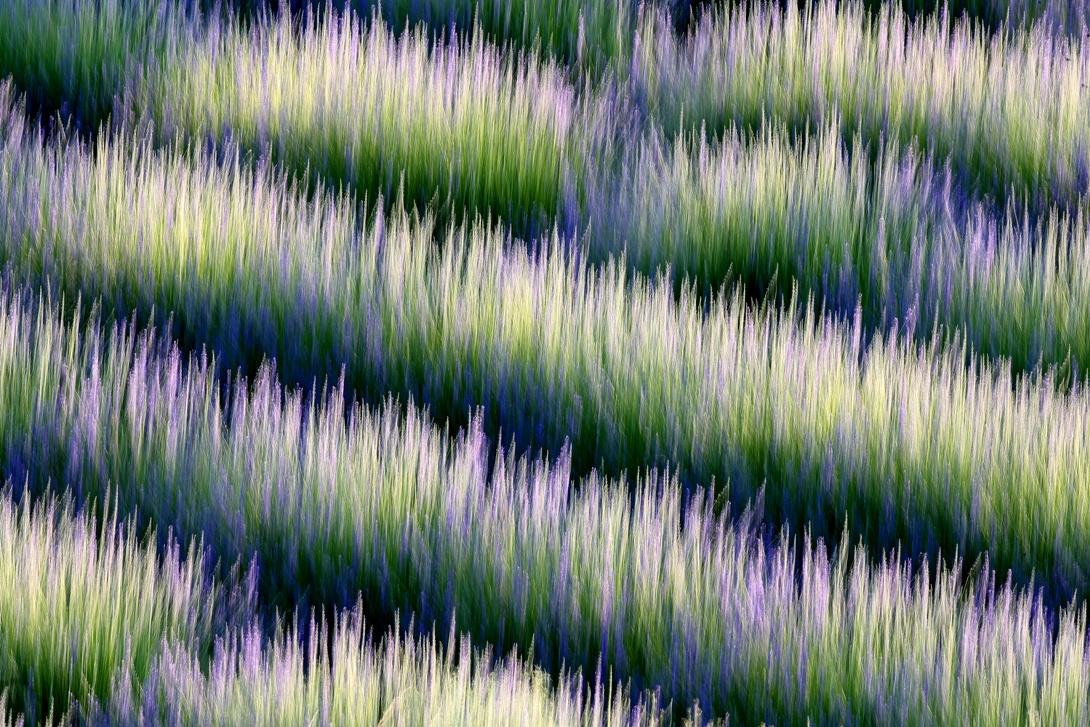 LAVANDAS - David Santiago, Landscape Photography