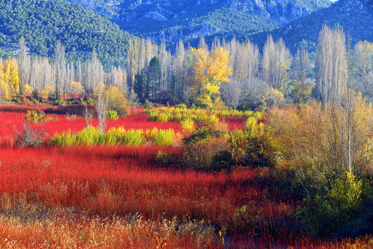 Otoño en Cañamares 5-7 de noviembre 2021 - David Santiago, Landscape Photography
